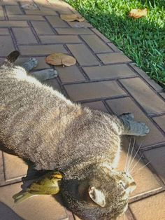 This bird hit a window and cat stayed by his side until he felt better...