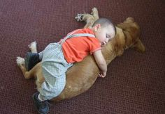 """Yes, she bears a suspicious resemblance to a Golden Retriever but he's sure that she is his horse.  He loves to grab her collar and try to jump astride. She obviously doesn't mind the attention. (""""Life in a Shoe"""" blog)"""