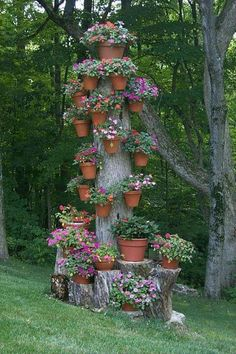 potted plant display