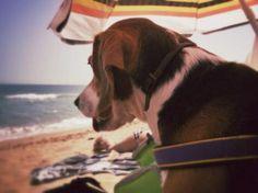 La playa de Caños de Meca, y Stalin, un guapo perro. Tandem ideal.