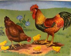 Vintage Rooster , Hen , and Chicks Poster
