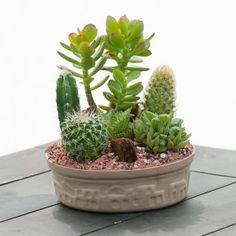 Pequeño Jardín de Cactus - Cactus Suculentas y - Por tipo de plantas - GivingPlants.com