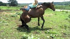 Funny Horse Fails Love - 2yamaha.com Funny Videos 2017, Funny Videos For Kids, Baby Animal Videos, Funny Animal Videos, Dog Videos Youtube, Funny Babies Laughing, Funny Kid Fails, Animal Fails, Funny Vines