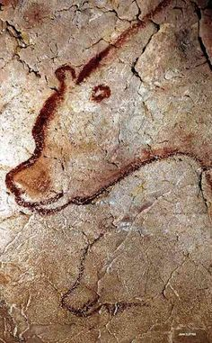 Shaded image of a cavebear, with an incomplete outline of a second cavebear below. Chauvet Cave