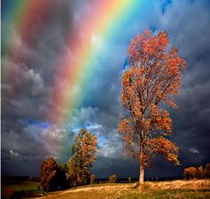 Promise After The Storm - beauty, clouds, dark, ominous, rainbow, sky, storm, trees
