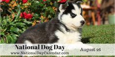 http://nationaldaycalendar.com/wp-content/uploads/2014/05/national-dog-day-august-26.png