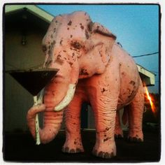 Did you see a Pink Elephant ? Tennessee.