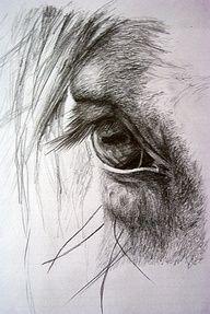 It's in their eyes…some of my favorite photos are the ones I take of a horses eye! Es ist in ihren Augen … einige meiner Lieblingsfotos sind die, die ich von einem Pferdeauge nehme! Pencil Drawings Of Animals, Horse Drawings, Animal Sketches, Drawing Sketches, Art Drawings, Drawing Ideas, Sketching, Horse Head Drawing, Horse Pencil Drawing