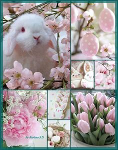 Spring / Easter in pink by Reyhan Seran Dursun - Ostern Pink Love, Pretty In Pink, Collages, Mood Colors, Colours, Color Collage, Photo Images, Beautiful Collage, Easter Celebration