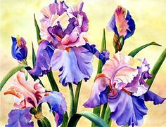 Mother Earth Iris by Suzanne  Shaffer  ~  x