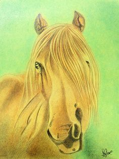 Horse Painting In Soft Crayons KALABHUMI.IN