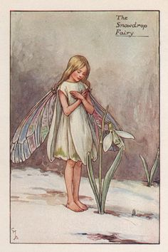 This is a genuine, original, pretty vintage print rescued from a disbound book; one of the Flower Fairies series. Date Published: Printed between 1928 and 1940 by Blackie & Son Ltd in Great Britain Print size: 4 inches x 5 1/2 inches Image size: 3 inches x 4 1/4 inches The lithograph has a Cicely Mary Barker, Fairy Land, Fairy Tales, Flower Fairies Books, Illustration Blume, Vintage Fairies, Fairytale Art, Faeries, Vintage Prints