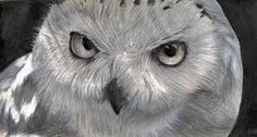"""Whoo Whoo, """"You'll love all the owls here: https://twitter.com/BlueOwlBot  *See Live Beautiful Owls: www.southfloridaaudubon.orgp  *A real life HOOT http://www.trafficwithanthony.com/v2/liveoffer/?aid=2&sid1=newm&sid2=&sid3=&sid4=&sid5= 67 lifetime traffic plus campaigns"""