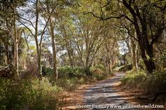 Fever Tree Forest KNP