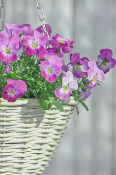 Gotta love a hanging basket on the porch!