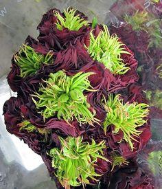 Ivan Hoe Rose Varieties, Hoe, Crafty, Weddings, Thoughts, Vegetables, Flowers, Plants, Wedding
