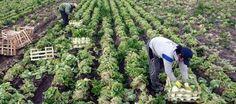 El INIA crea una bolsa de trabajo destinada a la contratación de peones agrícolas; 10 puestos - Donde Hay Trabajo | DomestikoEmpleo | Scoop.it