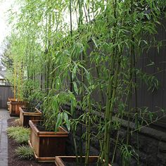 images of landscaping idea around bamboo
