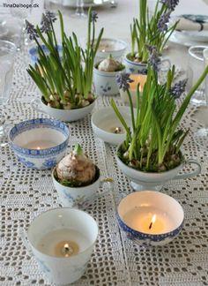 Påskepyntet frokostbord med perlehyacinter i forskellige kopper. Køb materialer til lysfremstilling i kreahobshop.dk
