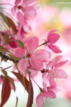Spring time♥♥♥