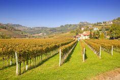 Slovenia Explorer - Goriška Brda Day Tour - sightseeing and wine-tasting