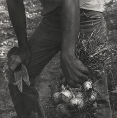 Onion Picker, Rio Grande Valley, Texas, 1979 - Ken Light