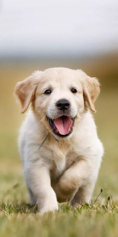 Cute Cats And Dogs, Cute Dogs And Puppies, Baby Dogs, Animals And Pets, Baby Animals, Cute Animals, Beautiful Dogs, Animals Beautiful, Pet Puppy