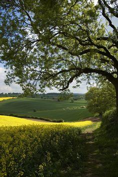 countryside, nottinghamshire  england