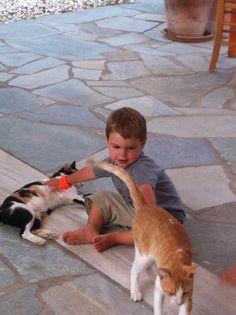 Aris & Silka enjoying the strokes of Bjork! The Strokes, Bjork, Hotel Guest, Corgi, Day, Photos, Animals, Image, Animales