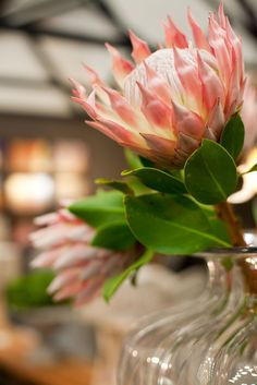 Protea at the 2013 Cape HOMEMAKERS Expo