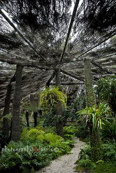 Simpson Shade House,in the Adelaide Botanic Gardens, is a pleasantly cool thatched hut containing palms and ferns. Nice spot to escape the city for a while. Shade House, Diy Greenhouse, Garden Architecture, Tropical Houses, Botanical Gardens, Palm, Country Roads, Shades, Outdoors