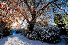 Winter wonderland at Waterford Castle, enjoy cozy nights in our Century Castle or in our modern lodges nearby Waterford Castle, Castle Hotels In Ireland, Modern Lodge, 16th Century, Winter Season, Lodges, Winter Wonderland, Country Roads, Cozy