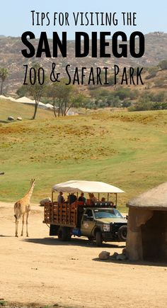 Our best tips for the San Diego Zoo & Safari park  Family Travel    Travel with baby, infant, toddler   Traveling with baby   Family Travel   San Diego with a baby   California Family Vacation   Balboa Park
