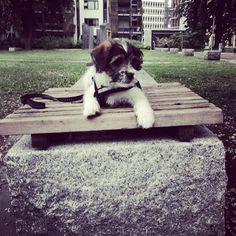 heididahlsveen:  #atsjoo sats #goodmorning from a #bench #puppy #valp #dog #hund #iphone #instagram