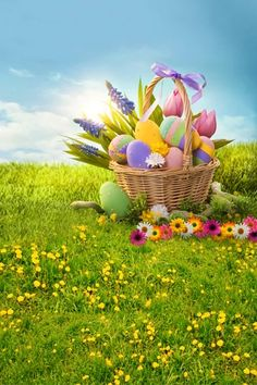 Easter Basket Eggs Spring Flowers Backdrop for Photo Studio Easter Backdrops, Muslin Backdrops, Custom Backdrops, Green Grass Background, Theme Background, Backdrop Stand, Flower Backdrop, Photography Backdrops, Photography Studios
