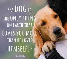 il vostro #miglioreamico <3 - cani e citazioni