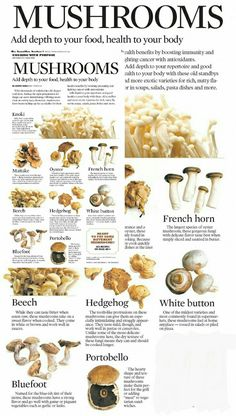 This is the kind of information I want about the edible food mushrooms. Does it have healthy effects on the human body. Edible Mushrooms, Stuffed Mushrooms, Fungi, Growing Mushrooms At Home, Mushroom Varieties, Fruits And Veggies, Vegetables, Vegan Recipes, Cooking Recipes