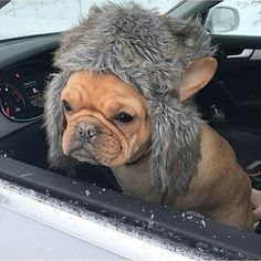 """I'm sick and tired of winter, even my cute hat doesn't help anymore"", French Bulldog in the Snow @lefrenchieface"