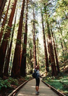 Hiking Muir Woods | Bay Area | California