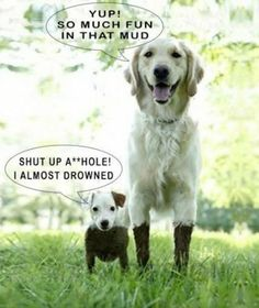 Hilarious Dog Joke – LOL!! « Jokes R Us