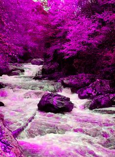 Lights and Shadows Nature Rose, Pink Nature, Nature Gif, Beautiful Fantasy Art, Beautiful Gif, Beautiful Pictures, Beautiful Landscape Wallpaper, Beautiful Landscapes, Scenery Pictures