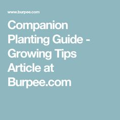 Companion Planting Guide - Growing Tips Article at Burpee.com