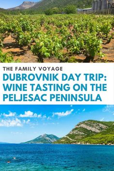 Looking for a daytrip from Dubrovnik? Visit the Peljesac Peninsula for Croatia wine tasting including dignac, plavac mali, and posip. Drink wine in Dalmatia, relax with locals on Prapratno Beach, then dine in Ston.