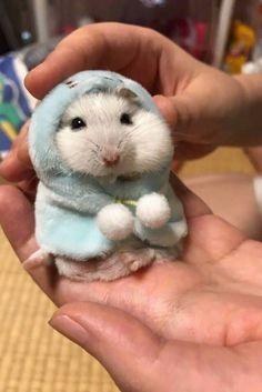 Hamster wearing a hoodie. Hamster wearing a hoodle , Cute Puppies, Cute Dogs, Cute Babies, Cute Little Animals, Cute Funny Animals, Funny Hamsters, Robo Dwarf Hamsters, Tier Fotos, Funny Animal Memes