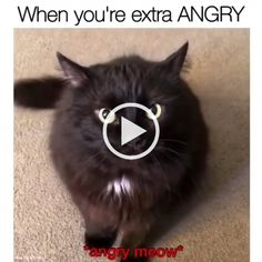 When you are extra ANGRY - hayhogi. Cute Cats And Dogs, Cool Cats, Cats And Kittens, Baby Animals, Funny Animals, Cute Animals, Funny Animal Videos, Funny Animal Pictures, Funny Videos