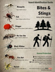 Insect identification guide for ticks, chiggers, spiders and more