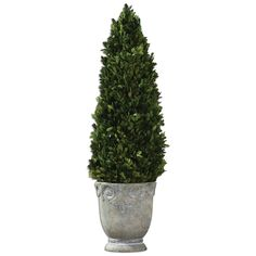 Boxwood Cone Topiary by Uttermost