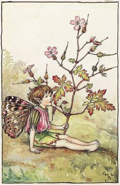 The Fairies of The Summer Archives - Flower Fairies - The Herb Robert Fairy - Cicely Mary Barker