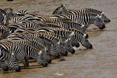 Kenya | Insolit viajes