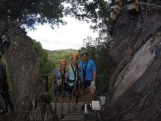 Tsitsikamma Canopy Tour - Linda Armstrong Unzipping Adventure Forest Floor, Canopy, Lush, Photo Galleries, Tours, Adventure, Gallery, Building, Buildings